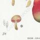 DETAILS 03 | Mycology - Mushroom - Boletus Pl.190