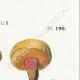 DETAILS 04 | Mycology - Mushroom - Boletus Pl.190