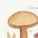 DETAILS 01   Mycology - Mushroom - Boletus Pl.191