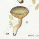 DÉTAILS 03 | Mycologie - Champignon - Boletus Pl.192