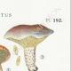DÉTAILS 04 | Mycologie - Champignon - Boletus Pl.192