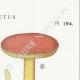 DÉTAILS 04   Mycologie - Champignon - Boletus Pl.194