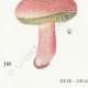 DÉTAILS 03 | Mycologie - Champignon - Boletus Pl.195
