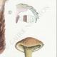DÉTAILS 05 | Mycologie - Champignon - Boletus Pl.196