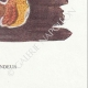 DÉTAILS 08 | Mycologie - Champignon - Merulius Pl.197