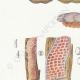 DETAILS 02   Mycology - Mushroom - Merulius Pl.198