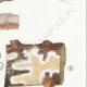 DETAILS 05   Mycology - Mushroom - Merulius Pl.198