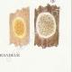 DETAILS 08   Mycology - Mushroom - Merulius Pl.198
