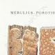 DÉTAILS 01   Mycologie - Champignon - Merulius - Porothelium - Fistulina Pl.200