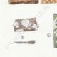 DÉTAILS 02   Mycologie - Champignon - Merulius - Porothelium - Fistulina Pl.200
