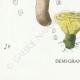 DETAILS 07   Mycology - Mushroom - Hydnum Pl.202