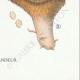 DETAILS 08 | Mycology - Mushroom - Hydnum Pl.203