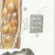 DETAILS 05 | Mycology - Mushroom - Hydnum Pl.205