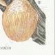 DETAILS 06 | Mycology - Mushroom - Hydnum Pl.205