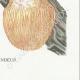 DETAILS 08 | Mycology - Mushroom - Hydnum Pl.205