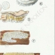DETALLES 05 | Micología - Seta - Sistotrema-Irpex Pl.207