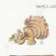 DÉTAILS 01   Mycologie - Champignon - Irpex - Odontia Pl.208