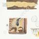 DÉTAILS 02   Mycologie - Champignon - Irpex - Odontia Pl.208