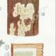 DÉTAILS 05 | Mycologie - Champignon - Odontia - Mucronella Pl.209