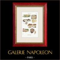Mycologie - Champignon - Radulum Pl.210