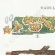DÉTAILS 01 | Mycologie - Champignon - Radulum Pl.210