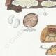 DÉTAILS 02 | Mycologie - Champignon - Radulum Pl.210