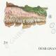 DÉTAILS 03 | Mycologie - Champignon - Radulum Pl.210