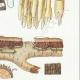 DÉTAILS 05 | Mycologie - Champignon - Radulum Pl.210