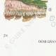 DÉTAILS 07 | Mycologie - Champignon - Radulum Pl.210