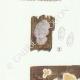 DÉTAILS 02 | Mycologie - Champignon - Phlebia - Kneiffia - Grandinia Pl.211