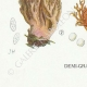 DETAILS 07 | Mycology - Mushroom - Clavaria Pl.214
