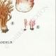 DETAILS 08 | Mycology - Mushroom - Clavaria Pl.214