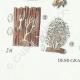 DETAILS 07 | Mycology - Mushroom - Clavaria Pl.216