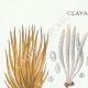 DÉTAILS 01 | Mycologie - Champignon - Clavaria Pl.217