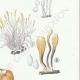 DÉTAILS 05 | Mycologie - Champignon - Clavaria Pl.217