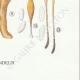 DÉTAILS 08 | Mycologie - Champignon - Clavaria Pl.217