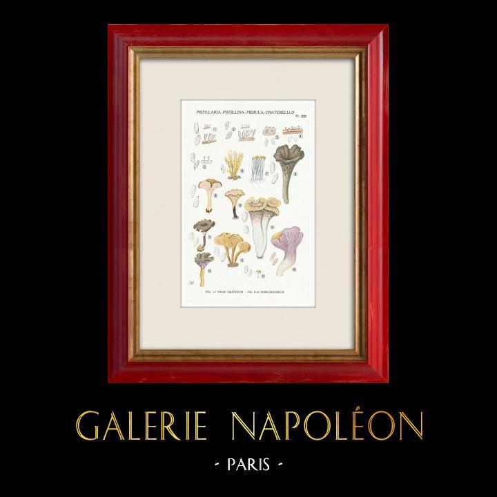 Gravures Anciennes & Dessins | Mycologie - Champignon - Pistillaria - Pistillina - Pierula - Craterellus Pl.221 | Impression | 1919