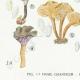 DÉTAILS 03 | Mycologie - Champignon - Pistillaria - Pistillina - Pierula - Craterellus Pl.221