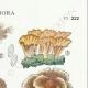 DÉTAILS 04 | Mycologie - Champignon - Telephora Pl.222