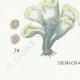 DÉTAILS 07 | Mycologie - Champignon - Telephora Pl.222