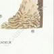 DÉTAILS 08 | Mycologie - Champignon - Telephora Pl.222