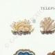 DÉTAILS 01   Mycologie - Champignon - Telephora Pl.223