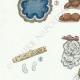 DÉTAILS 02   Mycologie - Champignon - Telephora Pl.223