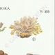 DÉTAILS 04   Mycologie - Champignon - Telephora Pl.223