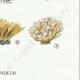 DÉTAILS 06   Mycologie - Champignon - Telephora Pl.223