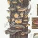 DETAILS 02 | Mycology - Mushroom - Stereum Pl.224