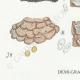 DETAILS 03 | Mycology - Mushroom - Stereum Pl.224