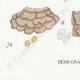 DETAILS 07 | Mycology - Mushroom - Stereum Pl.224