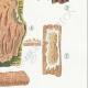DETAILS 05 | Mycology - Mushroom - Stereum Pl.225