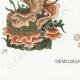 DETAILS 07 | Mycology - Mushroom - Stereum Pl.225